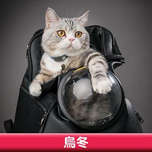 Pet Model 2020 Cat 1 烏冬