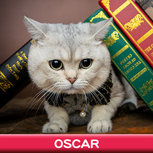 Pet Model 2020 Cat 2 Oscar
