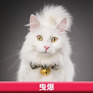 Pet Model 2020 Cat 6 曳爆