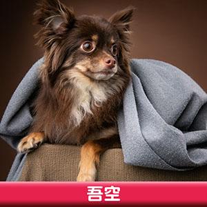 Pet Model 2020 Dog 10 吾空