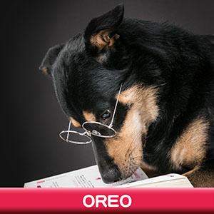 Pet Model 2020 Dog 11 Oreo