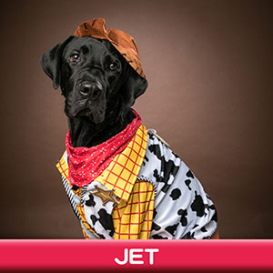 Pet Model 2020 Dog 13 Jet