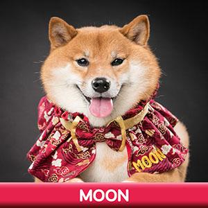 Pet Model 2020 Dog 14 Moon