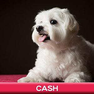 Pet Model 2020 Dog 18 Cash