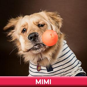 Pet Model 2020 Dog 22 Mimi