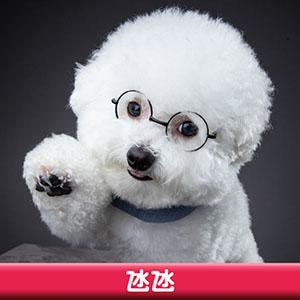 Pet Model 2020 Dog 4 氹氹