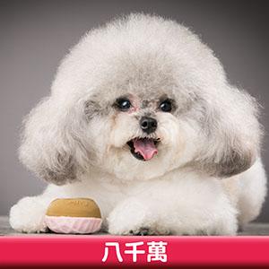 Pet Model 2020 Dog 7 八千萬