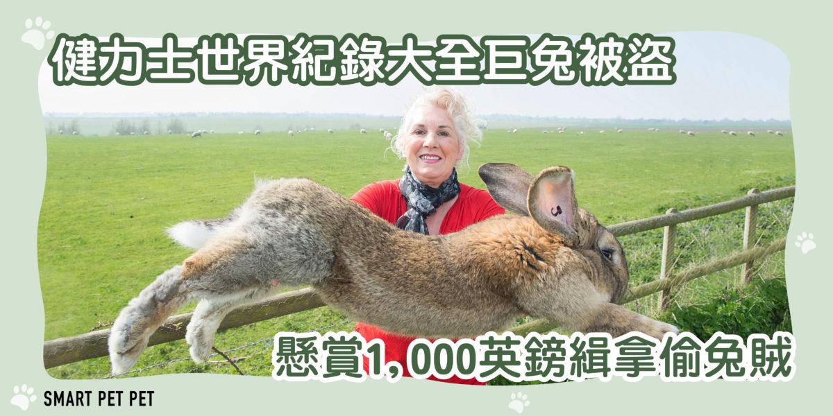 210健力士世界紀錄大全巨兔被盜-01