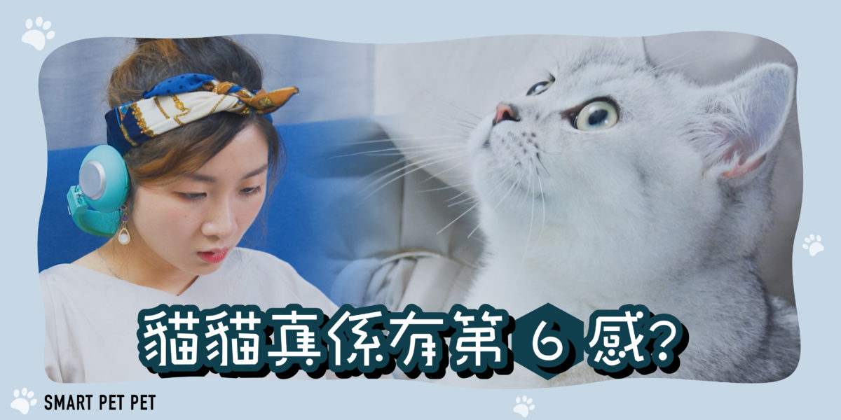 SuperCat_V02 website-01