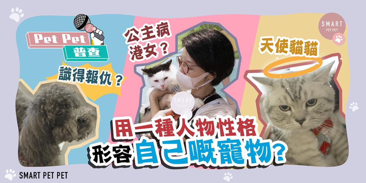 petpet普查_街訪_寵物性格_feature