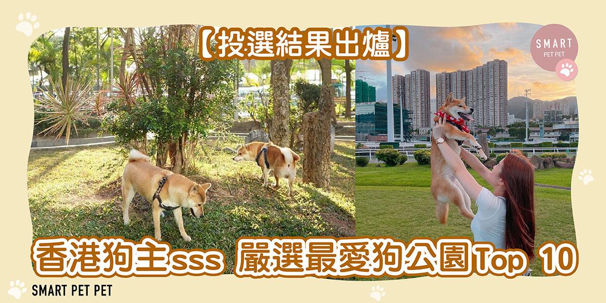 273 HK Pet Friendly Cafe (灣仔及港島南區)