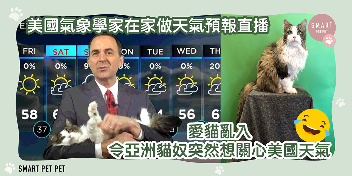 289 betty the weather cat